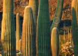 Cibles Cach�es For�t de Cactus